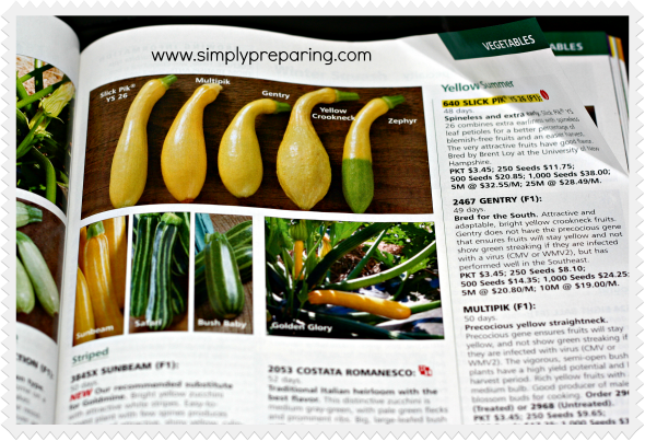 summer squash in a Johnny's Seeds catalogs - Garden Seed Source