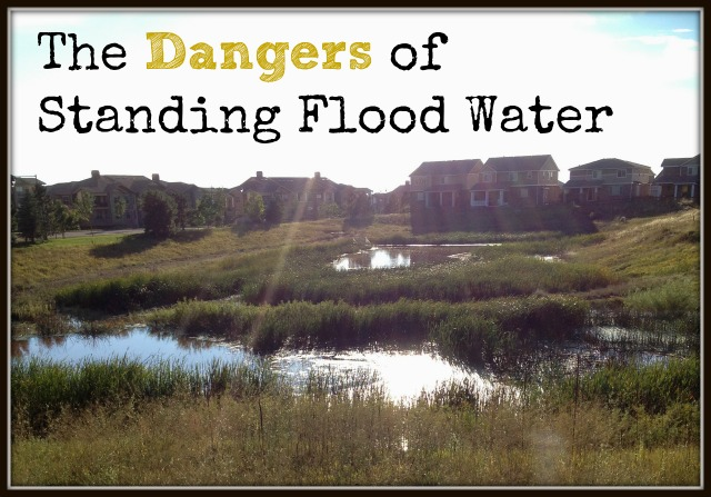 dangers of standing flood water