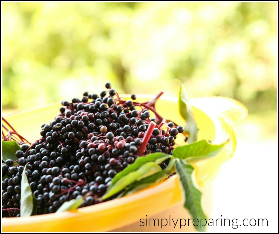 Homemade elderberry syrup is used to prevent colds and flu and boost the immune system. A DIY herbal syrup used in folk medicine for centuries, we'll show you an easy homemade recipe that can be made both on the stove top and in the Instnat Pot! Natural remedies have never tasted so good!