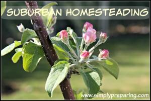suburban homesteading