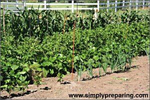 Beginning Backyard Vegetable Gardens